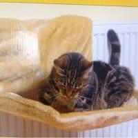 Топ 15 полезных товаров на Алиэкспресс для домашних животных - место 12 - фото 1