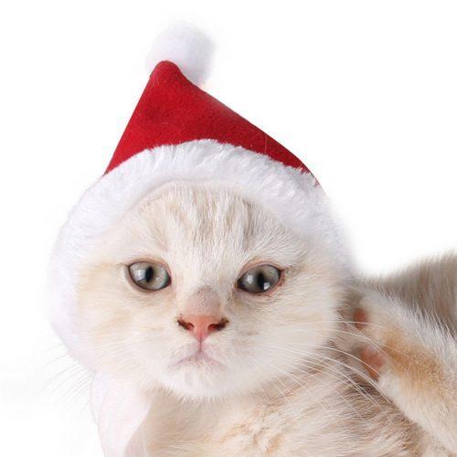 Новогодняя шапочка для кота и собаки