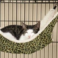 Подвесной гамак для кота и кошки на батарею