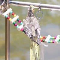 Деревянные жердочки-качели-лесенка в клетку для попугая