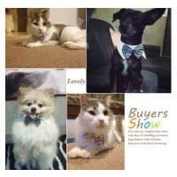 Ошейник галстук-бабочка для собак и кошек