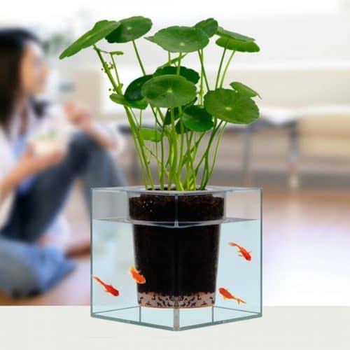 Кашпо-аквариум для комнатных цветов, растений