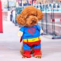 Костюм Супергероя (Супермена) для кота или собаки