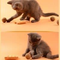 Топ 15 самых популярных игрушек для кошек на Алиэкспресс в России 2017 - место 3 - фото 2