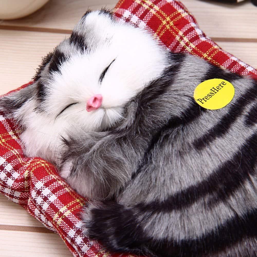 Картинки котик спит с игрушкой, велосипед раскраска картинки