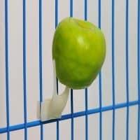 Подборка товаров для попугаев на Алиэкспресс - место 9 - фото 6
