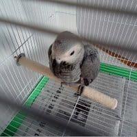 Шершавая жердочка в клетку для природного шлифования и стачивания когтей и клюва попугая