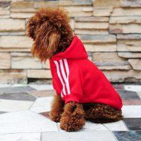 Топ 20 самых популярных товаров для собак на Алиэкспресс в России 2017 - место 6 - фото 15