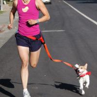 Поводок на пояс для бега с собакой
