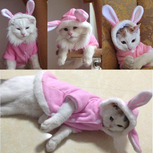 Новогодний розовый и красный костюм кролика с ушками для кота