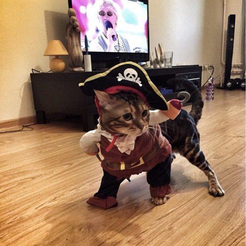 Костюм пирата для кота или собаки