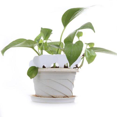 Таблички для подписи растений 100 шт./компл.