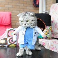Топ 8 самых популярных костюмов для кота на Алиэкспресс в России 2017 - место 2 - фото 4