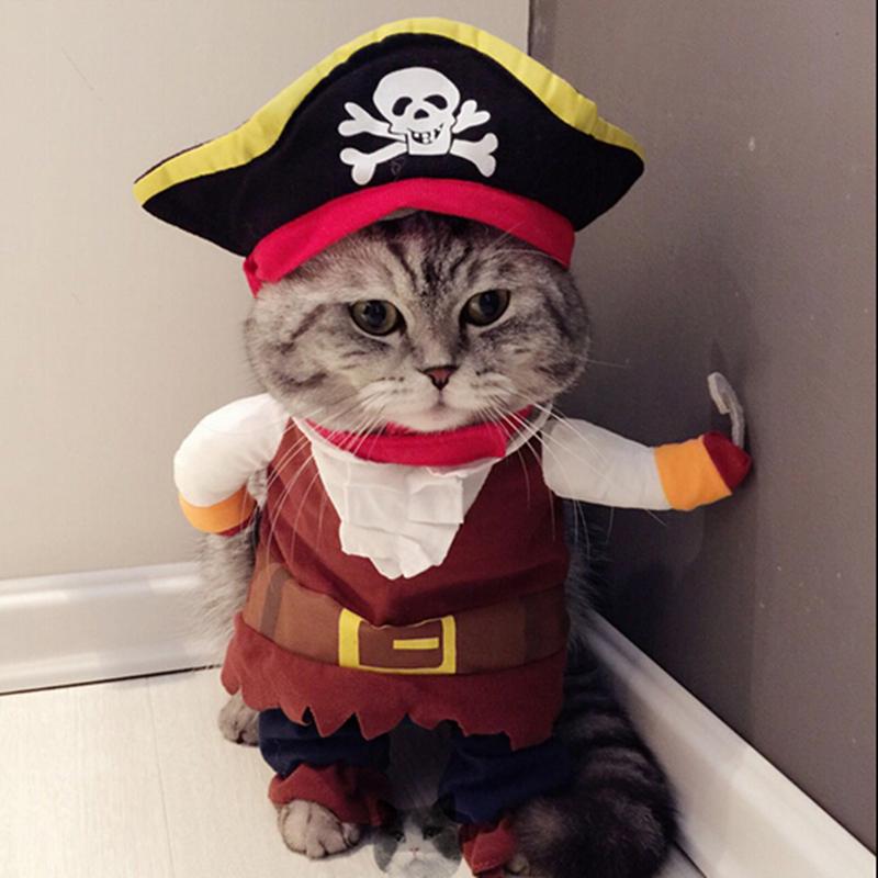 Сурикат, прикольные картинки с котами в костюмах