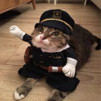 Топ 8 самых популярных костюмов для кота на Алиэкспресс в России 2017 - место 2 - фото 5
