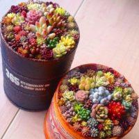 Семена многолетних растений литопс lithops Pseudotruncatella 100 шт./пакет