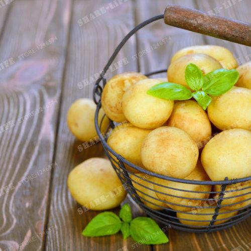 Фиолетовый, красный и белый картофель 200 шт. семян