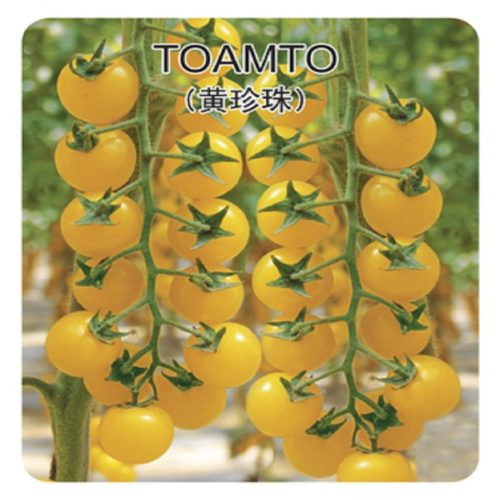 Семена желтых помидоров 200 шт.