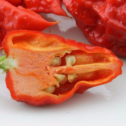 Семена перца Каролина Рипер (Каролинский жнец) 200 шт.