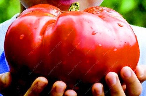 Семена гигантских красных и черных помидоров 100 шт.
