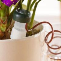 Автоматический полив комнатных растений
