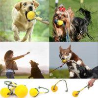 Игрушка для собак мяч на веревке