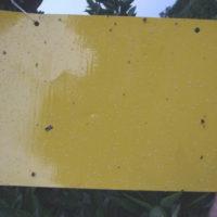 Желтые липкие пластины ловушки для насекомых 5 шт.