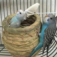Подборка товаров для попугаев на Алиэкспресс - место 2 - фото 6