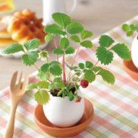 Растение в яйце (мята, базилик, земляника)