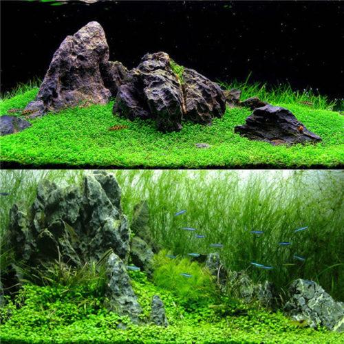 Семена травы для аквариума