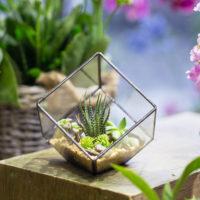 Геометрические стеклянные террариумы (флорариумы) на Алиэкспресс - место 4 - фото 6