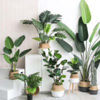 Зеленая тропическая подборка товаров на Алиэкспресс - место 1 - фото 1