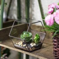 Геометрические стеклянные террариумы (флорариумы) на Алиэкспресс - место 5 - фото 5