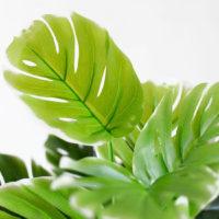 Зеленая тропическая подборка товаров на Алиэкспресс - место 1 - фото 6