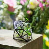 Геометрические стеклянные террариумы (флорариумы) на Алиэкспресс - место 1 - фото 3
