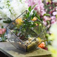 Прозрачный террариум (флорариум) в виде куба с треугольным основанием