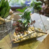 Геометрические стеклянные террариумы (флорариумы) на Алиэкспресс - место 4 - фото 3