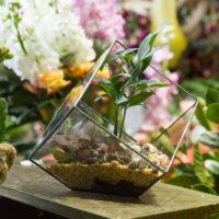Геометрические стеклянные террариумы (флорариумы) на Алиэкспресс - место 4 - фото 4