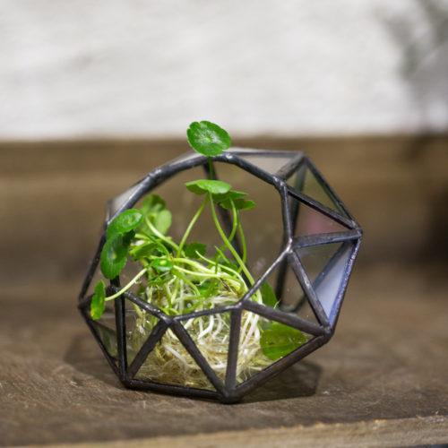 Прозрачный стеклянный террариум (флорариум) в виде бриллианта/алмаза
