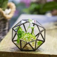 Геометрические стеклянные террариумы (флорариумы) на Алиэкспресс - место 1 - фото 2
