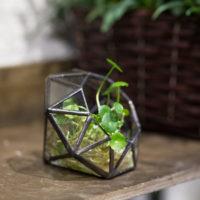 Геометрические стеклянные террариумы (флорариумы) на Алиэкспресс - место 1 - фото 4