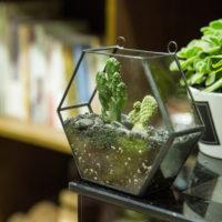 Геометрические стеклянные террариумы (флорариумы) на Алиэкспресс - место 5 - фото 1