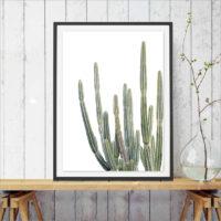 Плакат рисунок на холсте с изображением кактуса (разные размеры)