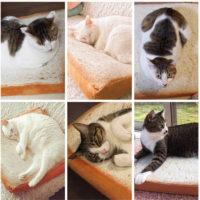 Подушка лежанка для кошек в виде тоста 37 см
