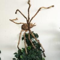 Гигантский волосатый паук со светодиодными глазами