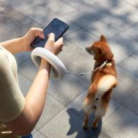 Товары для домашних животных от Xiaomi с Алиэкспресс - место 9 - фото 6
