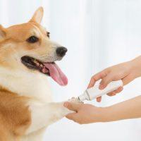 Товары для домашних животных от Xiaomi с Алиэкспресс - место 4 - фото 5